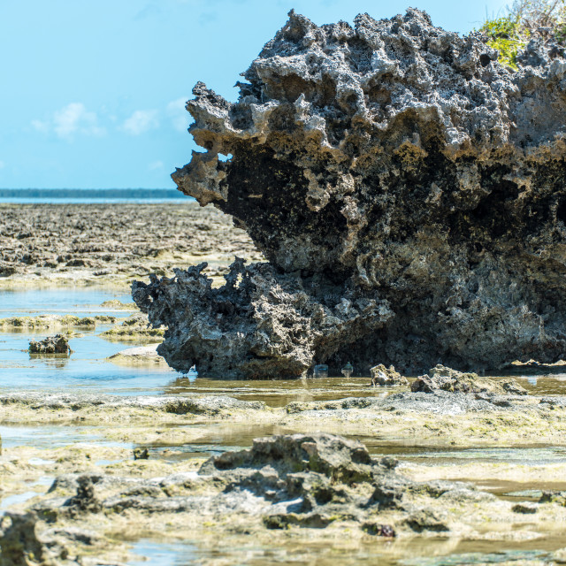 """Coral Outcrop on coast of Mozambique 2"" stock image"