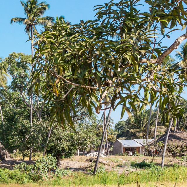 """Village in Mozambique"" stock image"