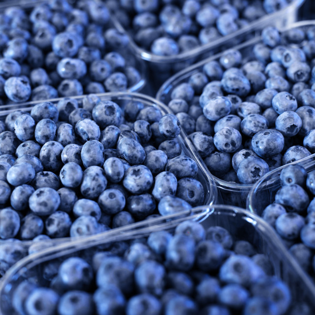 """Blueberries"" stock image"