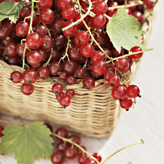 """Red currants"" stock image"