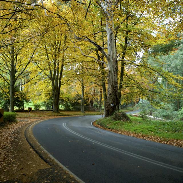 """Beautiful Fall Trees"" stock image"