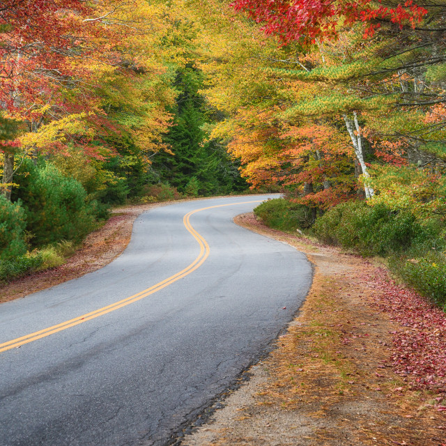 """""""Winding road curves through autumn trees in New England"""" stock image"""