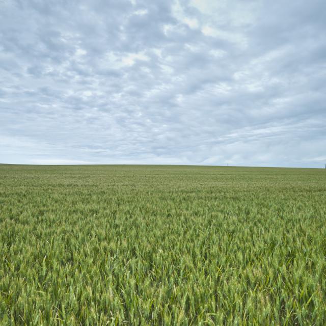 """Field"" stock image"