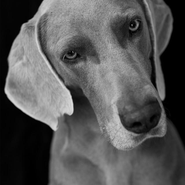 """""""Dog"""" stock image"""