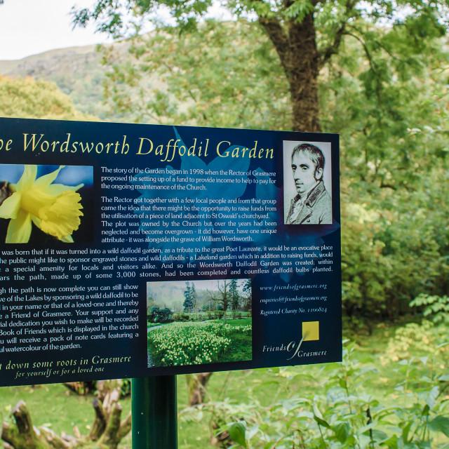 """The Wordsworth Daffodil Garden"" stock image"