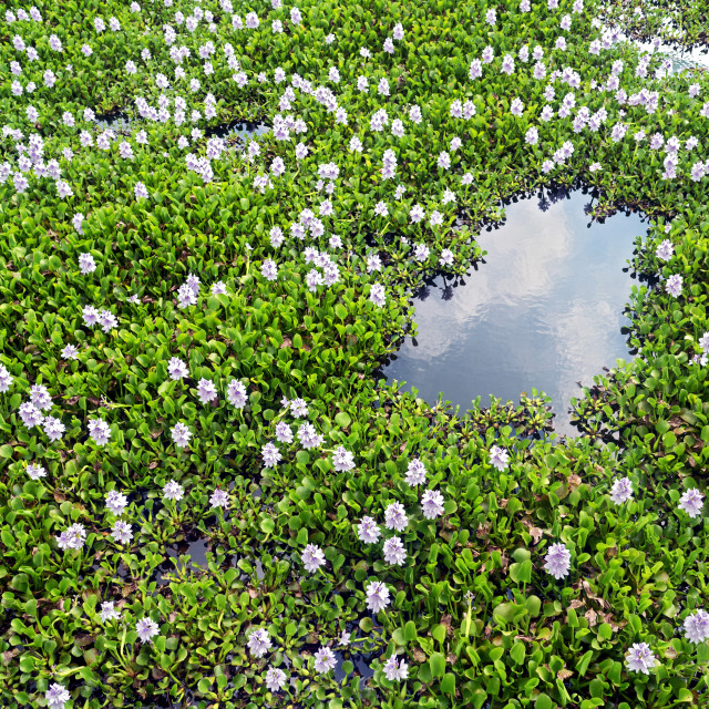 """Flower Covered Lake, Imperial Tomb of Thieu Tri"" stock image"