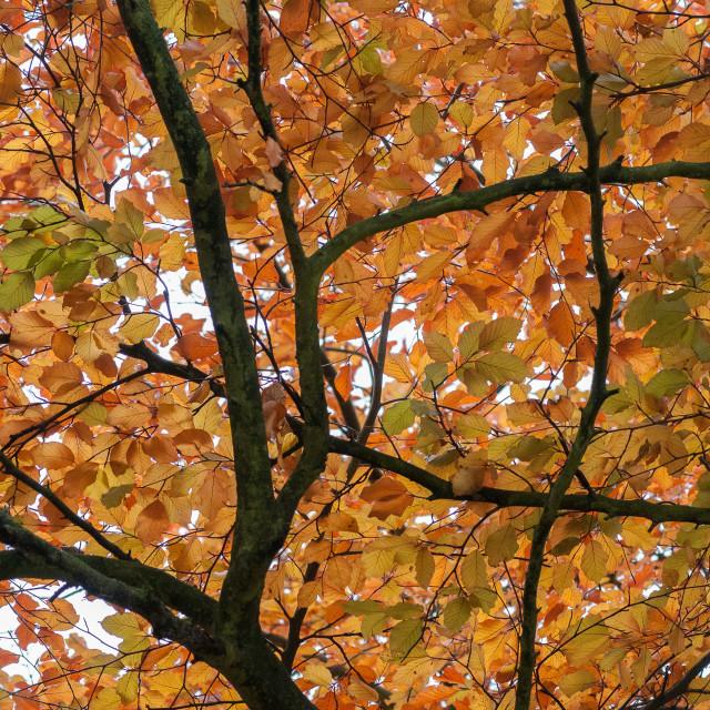 """""""Eyam Autumn Trees"""" stock image"""