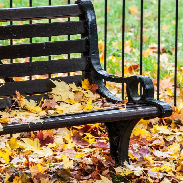 """Leafy Seat"" stock image"
