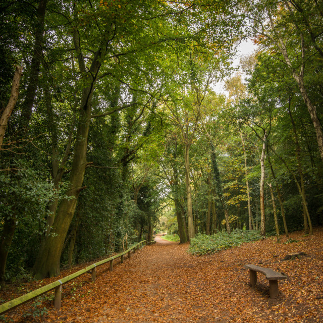 """Leafy Autumn Walk"" stock image"