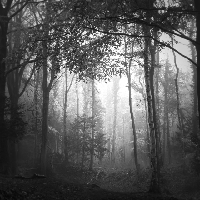 """A Woodland in Shadow"" stock image"