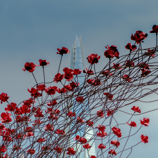"""""""Ceramic Poppies and the Shard"""" stock image"""
