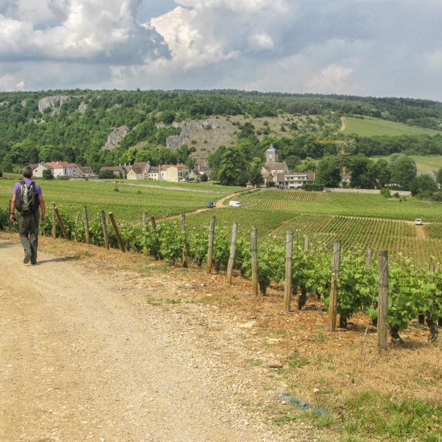 """""""Burgundy walking"""" stock image"""