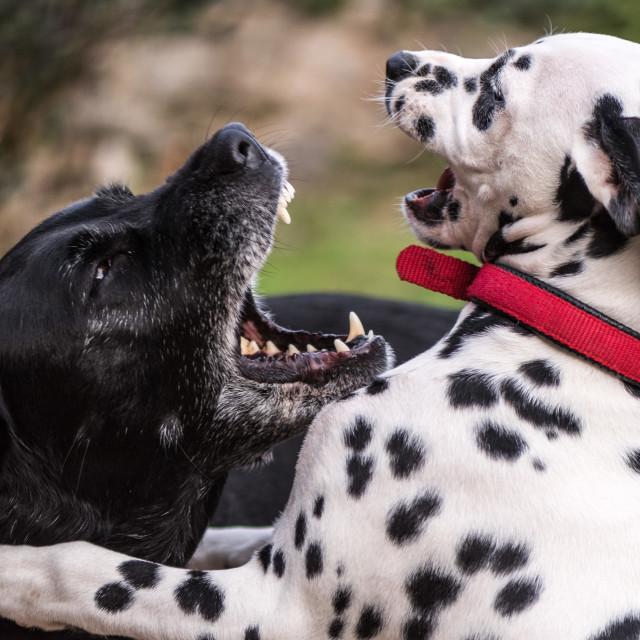"""Dog Play"" stock image"