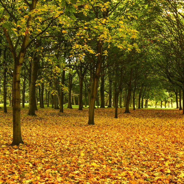 """Autumnal trees"" stock image"