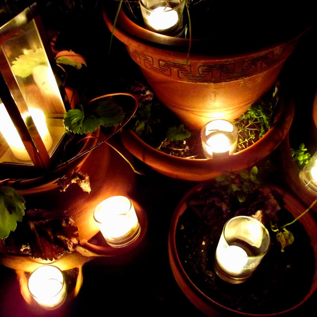 """Candle Lit Plants"" stock image"