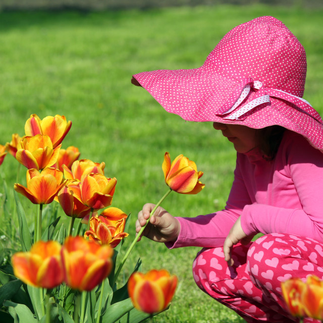 """little girl smell tulip flower spring scene"" stock image"