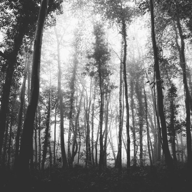 """Shadow Trees"" stock image"