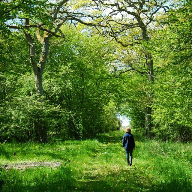 """""""Springtime walk"""" stock image"""