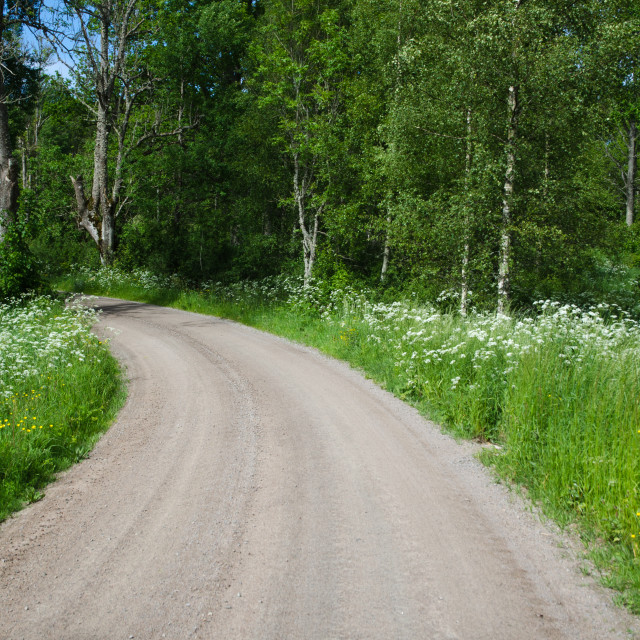 """Country road in a summer landscape"" stock image"