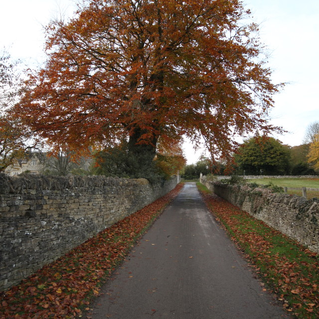 """Country lane in the Cotswolds"" stock image"