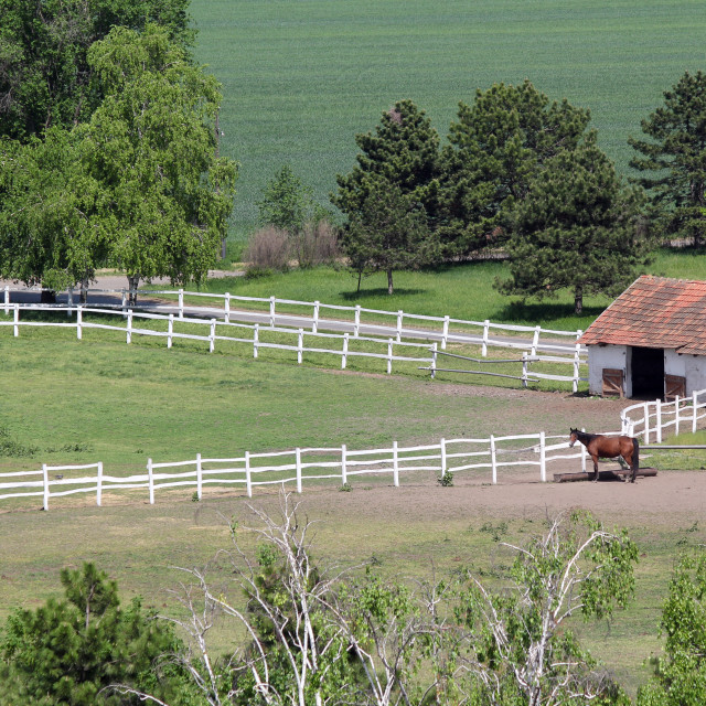 """""""farmland with corral and horse aerial view"""" stock image"""