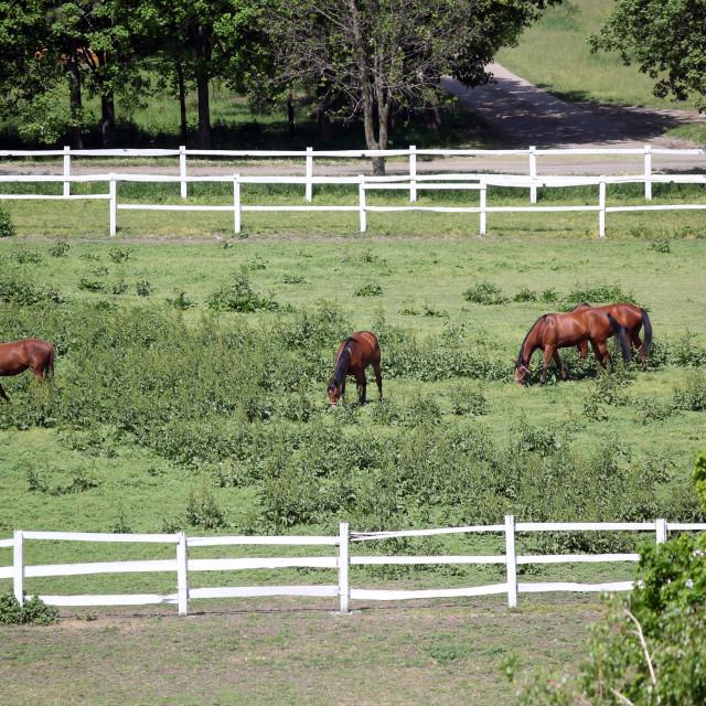 """herd of horses aerial view"" stock image"