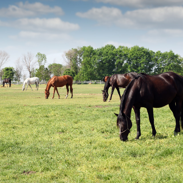 """herd of horses grazing ranch scene"" stock image"