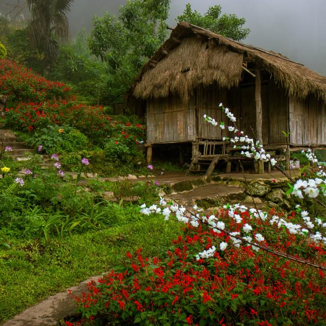 """Hmong Hill Tribe Garden"" stock image"