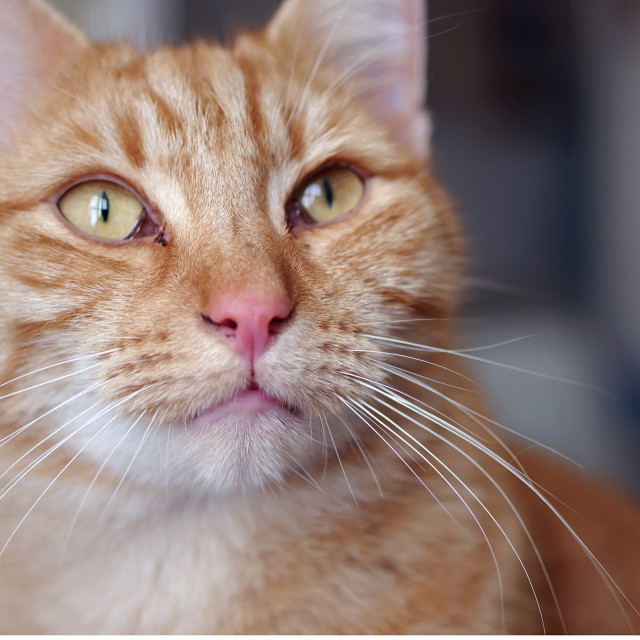 """""""Whiskers"""" stock image"""