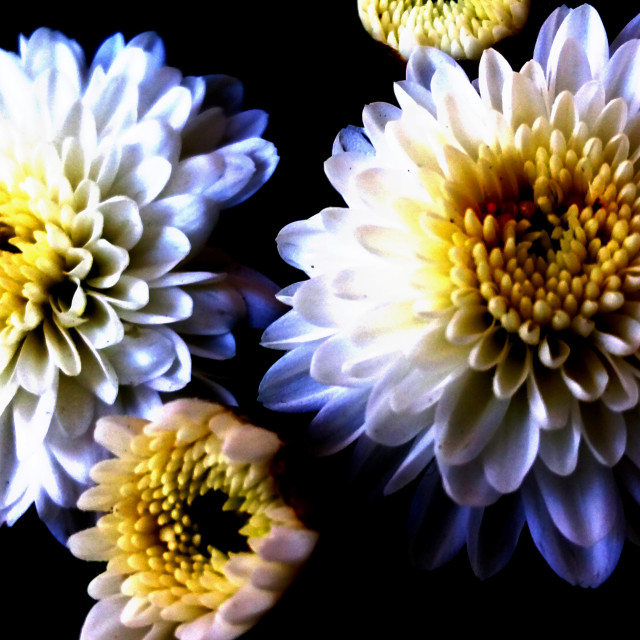"""Floral Close Up-1"" stock image"