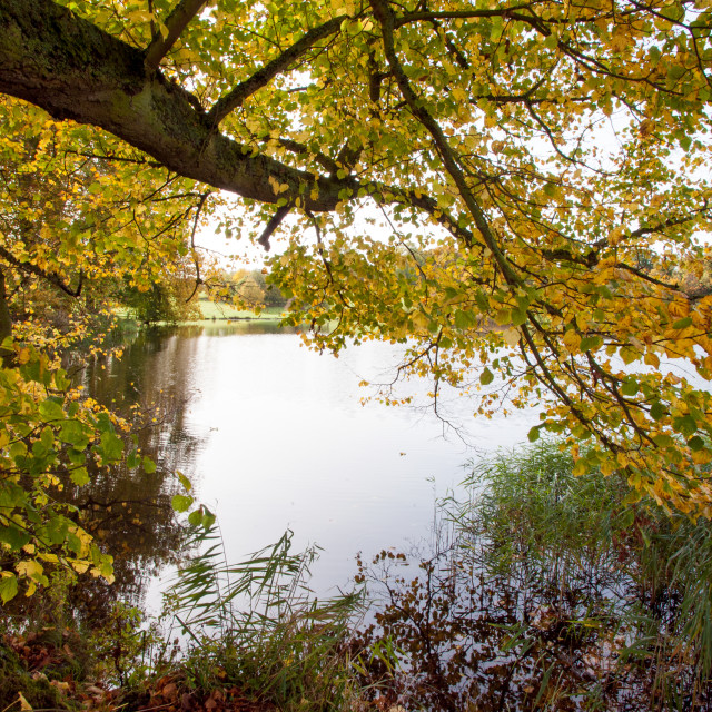 """Lakeside in autumn"" stock image"