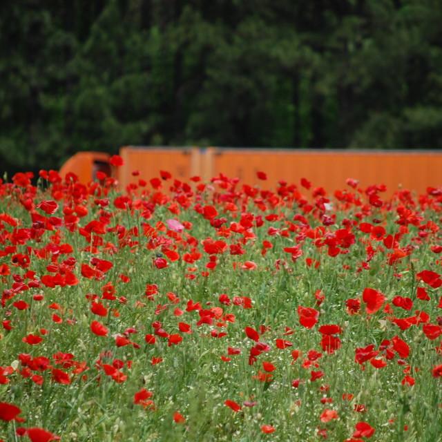 """Orange Truck Red Flowers"" stock image"