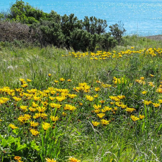 """""""Palliser Bay shoreline"""" stock image"""
