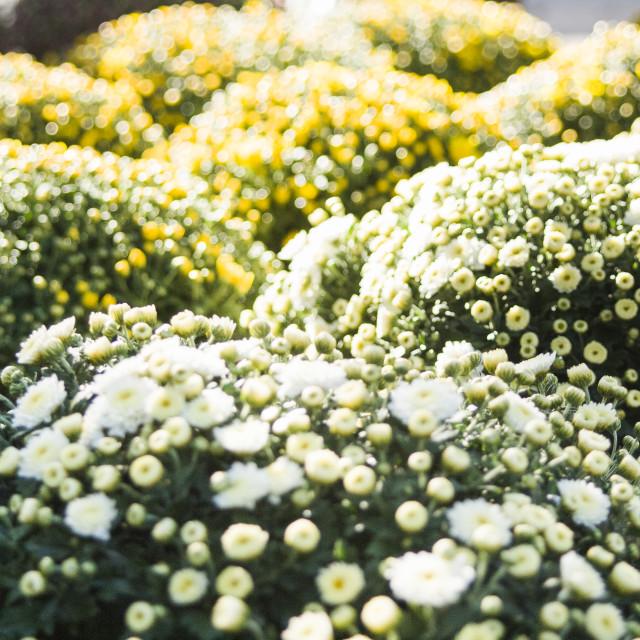 """Plants & Flowers"" stock image"