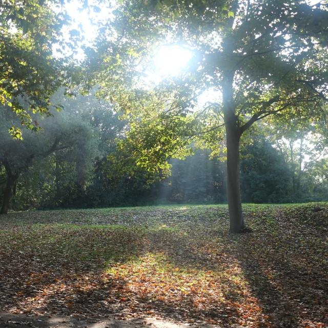 """Autumn in Battersea Park 2"" stock image"