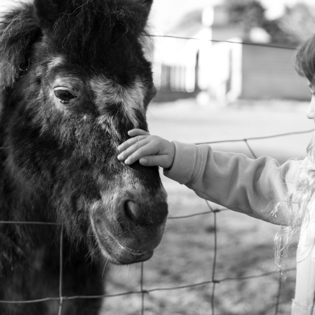 """Child stroking pony"" stock image"