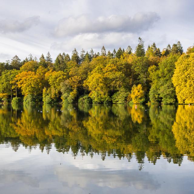 """""""Autumn sunshine at Shearwater Lake, Crockerton, Wiltshire (2)"""" stock image"""