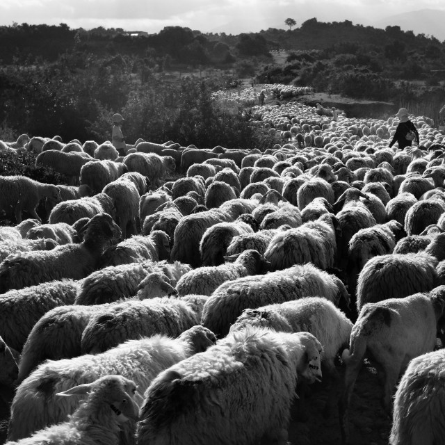 """Sheep Road"" stock image"
