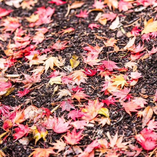 """Autumn Fallen Leaves"" stock image"