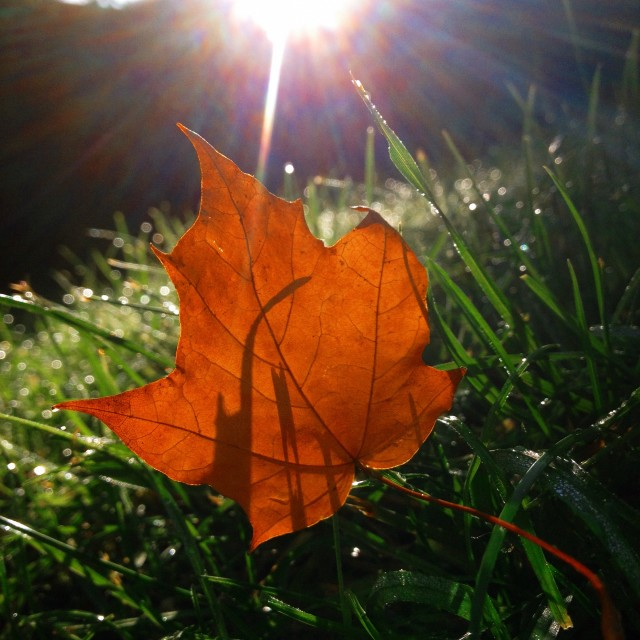 """Sun behind autumn leaf"" stock image"