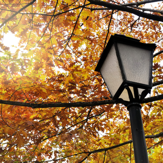 """lamp post in park"" stock image"