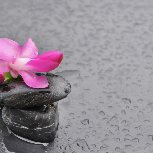 """flower and pebbles"" stock image"