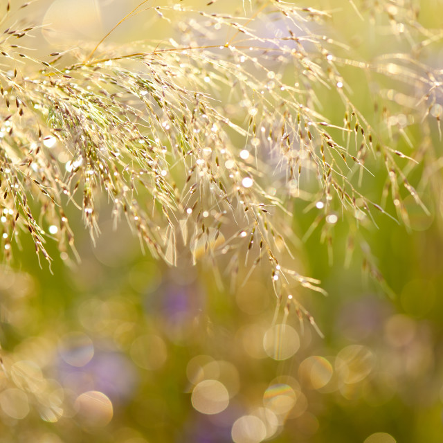 """Wet grass in bokeh circles"" stock image"