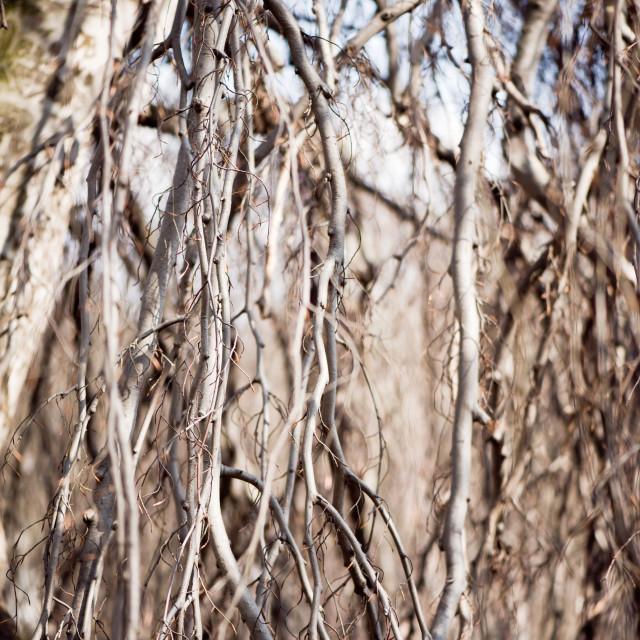 """Fall twigs melancholic nature"" stock image"