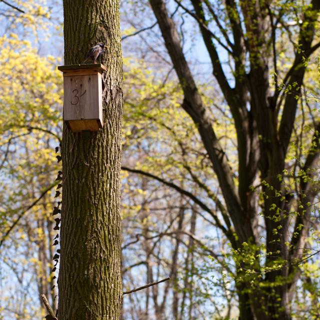 """Starling bird on nest box"" stock image"