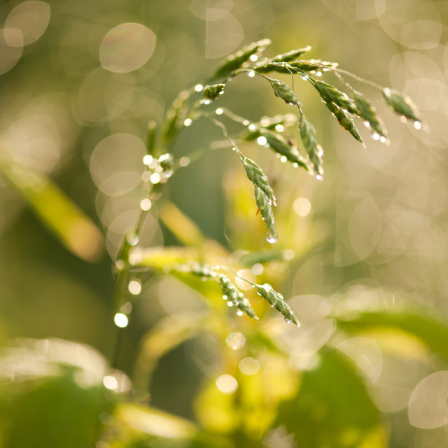 """Grass macro after the rain"" stock image"