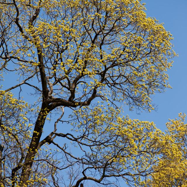 """Spring without Polarising filter effect"" stock image"