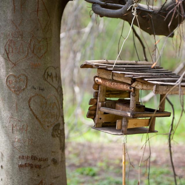 """""""Empty bird feeder dangling"""" stock image"""