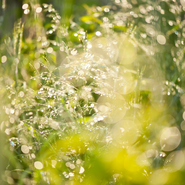 """Sunny grass after the rain"" stock image"