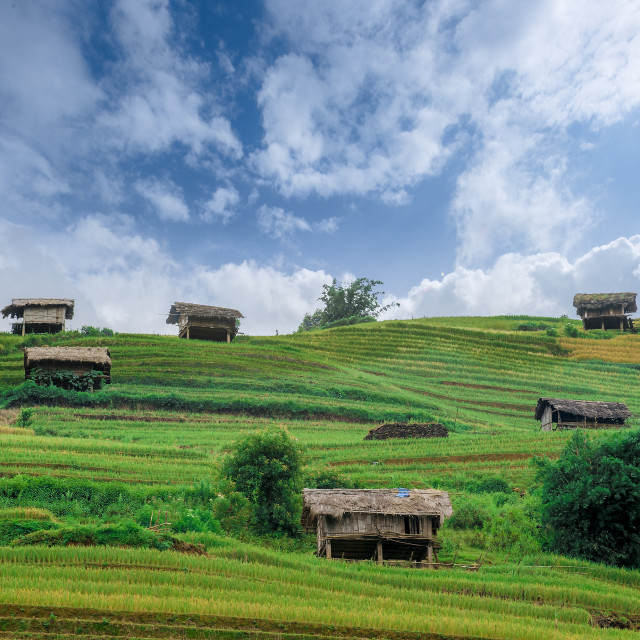 """stilt houses on the hill of rice terraced fields"" stock image"